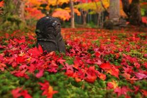 IMG_5860-Enkoji-Temple,-Kyoto